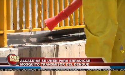 Alcaldías se unen para erradicar mosquito transmisor del dengue