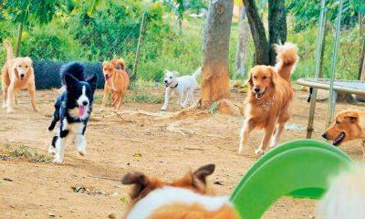 En el área metropolitana será el primer albergue para animales de la calle