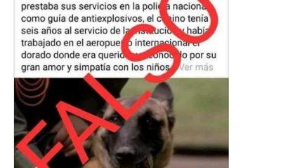 Los mensajes incluían una fotografía del canino y un texto en el que se contaba que uno no tenía 6 años al servicio de la Policía Nacional como guía antiexplosivo
