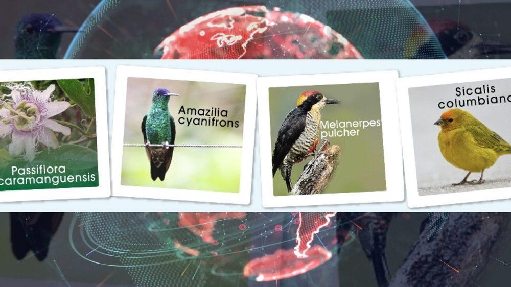 A través de Plataformas digitales, la Alcaldía de Bucaramanga,promueve la votación entre la ciudadanía para elegir a la especie más representativa de la biodiversidad de la ciudad.