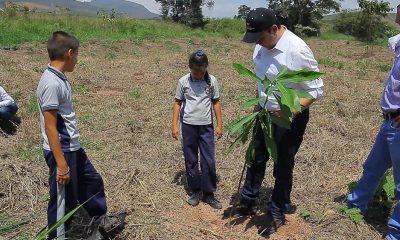 Con la siembra de 300 árboles nativos de Girón y Lebrija, la Gobernación de Santander y la CDMB se proponen ayudar a recuperar y preservar a 'El Pantano'